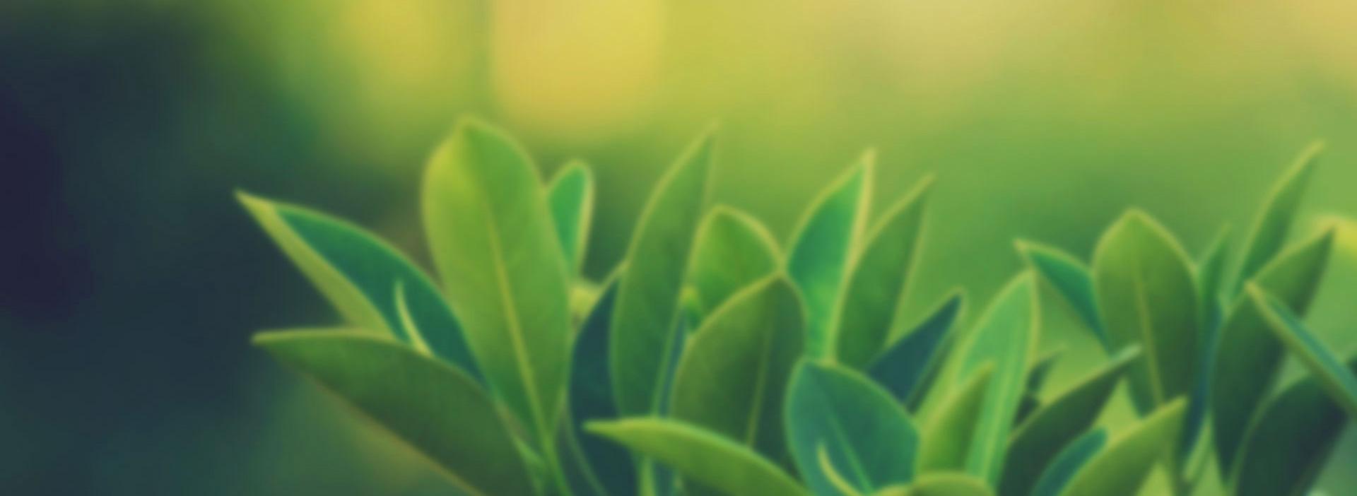 crpye-karşı-faydalı-gelen-bitkiler-nelerdir